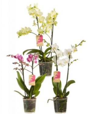 orchidee planten mix