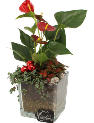 kerst arrangement anthurium